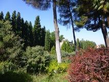 Wald nahe Granada in Sierra Nevada stockbild