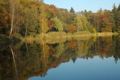 Wald nahe See Lizenzfreies Stockfoto