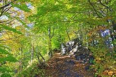 Wald nahe Stadt Ruzomberok Stockbild