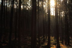 Wald in Nationalpark Sumava Stockbilder