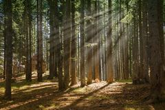 Wald am nebeligen Morgen Lizenzfreie Stockfotografie