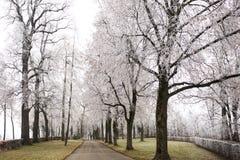 Wald nell'inverno Fotografia Stock