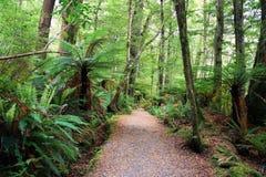Wald in Neuseeland stockbild