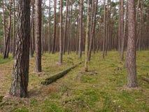 Wald in Nord-Deutschland lizenzfreies stockbild