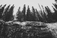 Wald oben betrachten Lizenzfreies Stockfoto