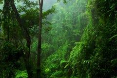 Wald, optischer Effekt des Blattes. Stockbild