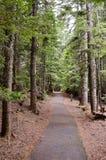 Wald in Oregon-Staat Stockfotos