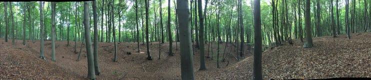 Wald-overvieuw lizenzfreie stockfotografie