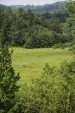 Wald in Quebec lizenzfreie stockfotos