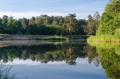 Wald reflektiert Stockbild