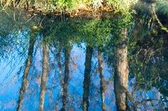 Wald reflektiert im Fluss stockfotos
