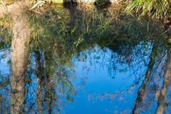 Wald reflektiert im Fluss lizenzfreie stockfotografie