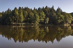 Wald reflektiert im See stockfoto