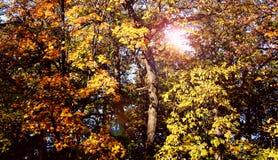 Wald in Rumänien Stockbilder