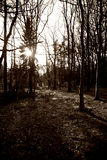 Wald in Schwarzweiss Stockfotografie