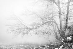 Wald in Schwarzweiss Stockfoto