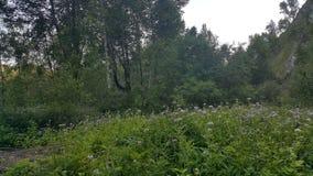 Wald in Sibirien stockfoto