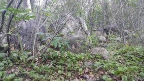 Wald in Sibirien lizenzfreie stockbilder