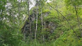 Wald in Sibirien lizenzfreie stockfotos
