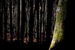 Wald in Slowakei Stockfoto