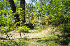 Wald am Sommer Stockfoto