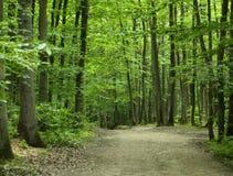 Wald am Sommer Stockbild