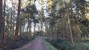 Wald. Sonne, Baum Royalty Free Stock Photo