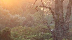 Wald am Sonnenuntergang stock video footage