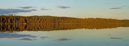 Wald am Sonnenuntergang stockfotografie