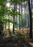 Wald am sonnigen Sommertag Lizenzfreie Stockfotografie