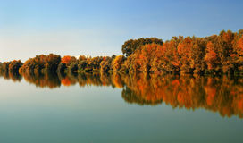 Wald in später Oktober Stockbilder