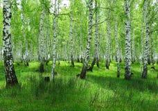 Wald-Steppen im Sommer Stockbild