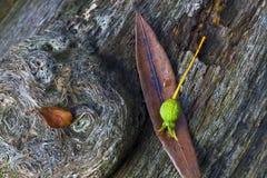Wald-stilll Leben Stockfoto