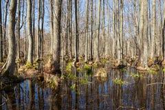 Wald szenisch Lizenzfreies Stockbild