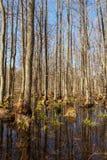 Wald szenisch Stockfotos