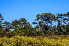 Wald in Thailand Stockbild