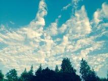 Wald trifft Himmel Stockfoto