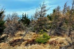 Wald, trockener Baum Stockfotografie