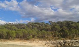Wald am Ufer eines Reservoirs lizenzfreies stockbild