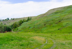 Wald um die Wiese auf einem steilen Berghang lizenzfreies stockfoto