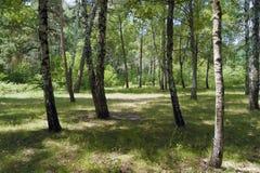 Wald un einem Sommertag photographie stock