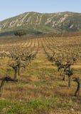 Wald und Agricultura stockbilder