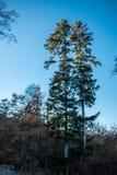 Wald und Bäume Stockfoto