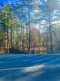 Wald und Bäume Stockfotografie