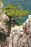Wald und Berge von Krim, Ai-Petri-Berg Lizenzfreies Stockbild