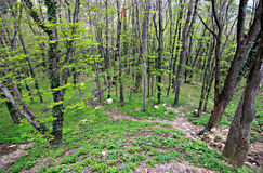 Wald und Berge von Krim, Ai-Petri-Berg Stockbild