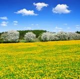 Wald und blauer Himmel mit Wolken Lizenzfreie Stockbilder