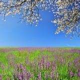 Wald und blauer Himmel mit Wolken Lizenzfreie Stockfotografie