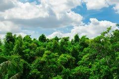 Wald und der Himmel mit den Wolken lizenzfreie stockfotografie