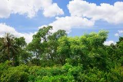 Wald und der Himmel mit den Wolken Stockbild